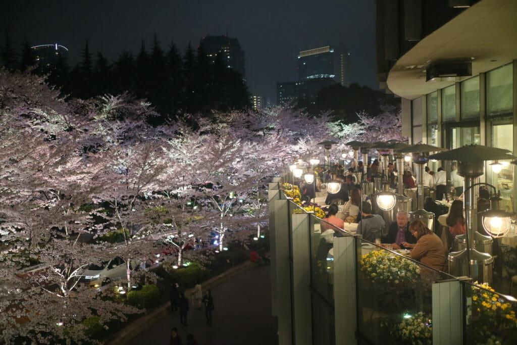ミッドタウン桜ライトアップレストラン