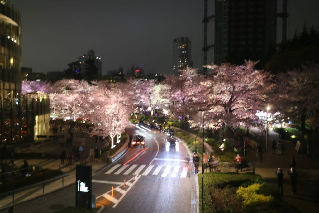 東京ミッドタウン桜のライトアップ