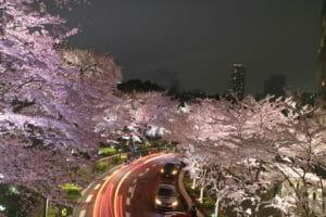 六本木ミッドタウン桜のライトアップ