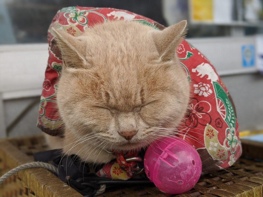 青海島自然探索路駐車場の名物猫ちゃん