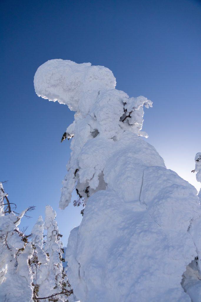 山形蔵王のスノーモンスターの写真