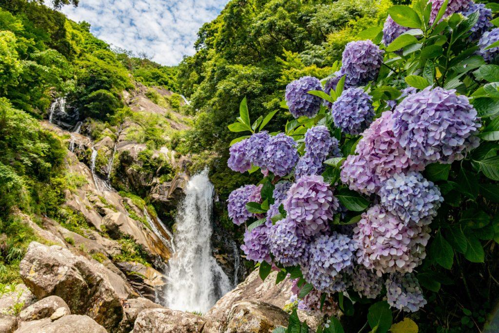 佐賀唐津の見帰りの滝と紫陽花の写真
