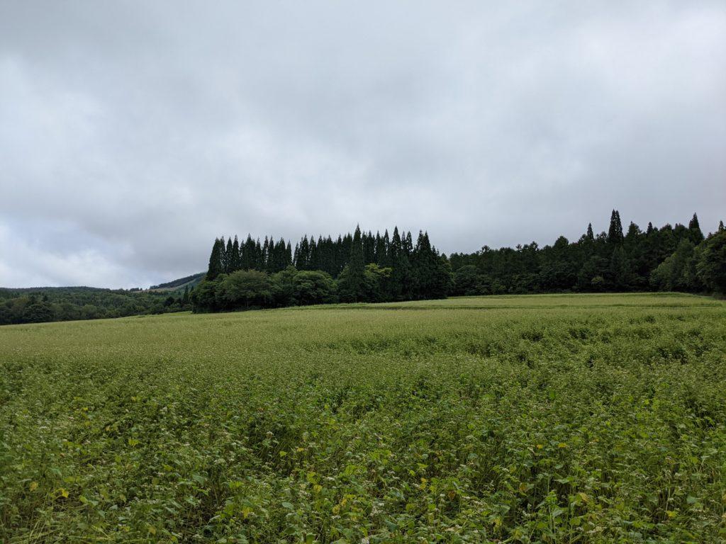長野戸隠展望苑のそばの花畑